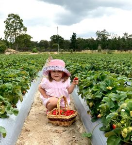 Strawberry picking with kids